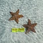 Tiny Stars a Cayo Largo, Cuba